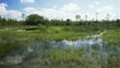 Flooded grasslands and savannas