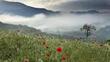 Montane grasslands and shrublands