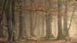 Broadleaf forest