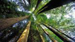 Forêts tempérées de conifères