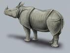 Rhinoceros unicornis