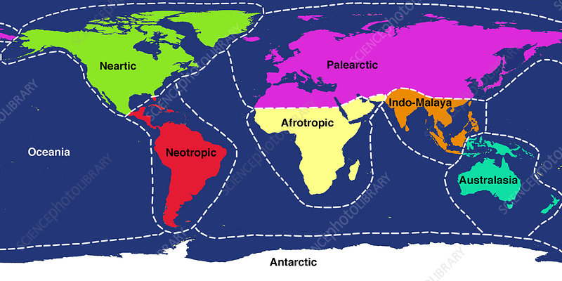 A world map showing the approximate 8 main ecozones of Earth. An ecozone is a region containing animal life that evolved together, separated from the other ecozones, for most of their history. The ecozones are: Palaearctic (purple, covering much of Eurasia); Nearctic (green, North America); Neotropic (red, South and Central America); Afrotropic (yellow, sub-Saharan Africa); Indomalaya (orange, covering South-East Asia and some equatorial Pacific islands); Australasia (blue, covering Australasia); Oceania (beige, the Pacific islands); and Antarctic (white).